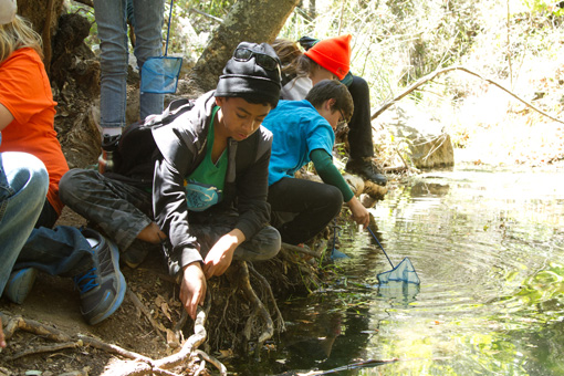 Photograph of a group of 6th graders thoughtfully using dip nets along a steam.